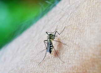 डेंगू क्या है?डेंगू के कारण क्या है? डेंगू के लक्षण क्या है?पूरी जानकारी